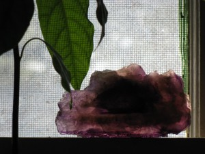 Photo of a large fluorite crystal and an avocado plant